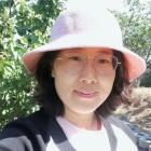 阳光的桂花树
