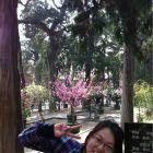 杉树的春天